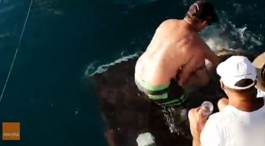Tiburón ataca al ser alimentado